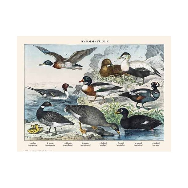 Natur plakat 30x40cm