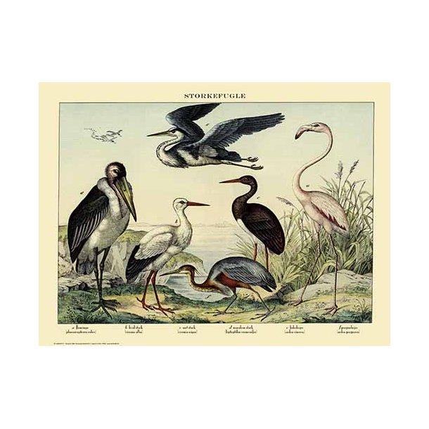 Natur plakat 50x70cm