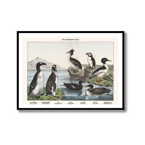 Natur plakat 50x70cm i sort ramme