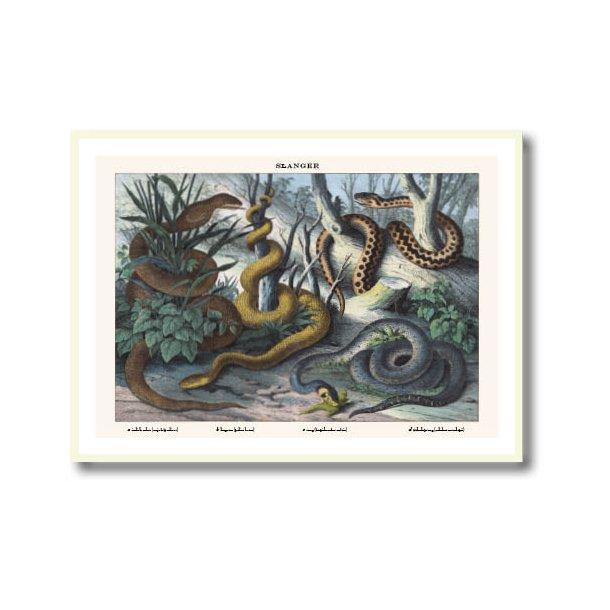 Natur plakat 30x40cm i hvid ramme