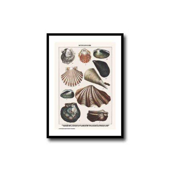 Natur plakat 30x40cm i sort ramme