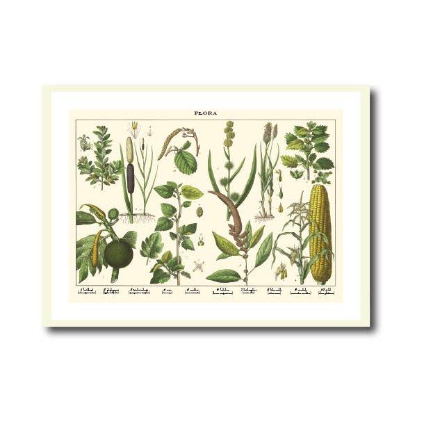 Natur plakat 50x70cm i hvid ramme
